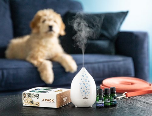 Do You Use Essential Oils Responsibly Around Pets?